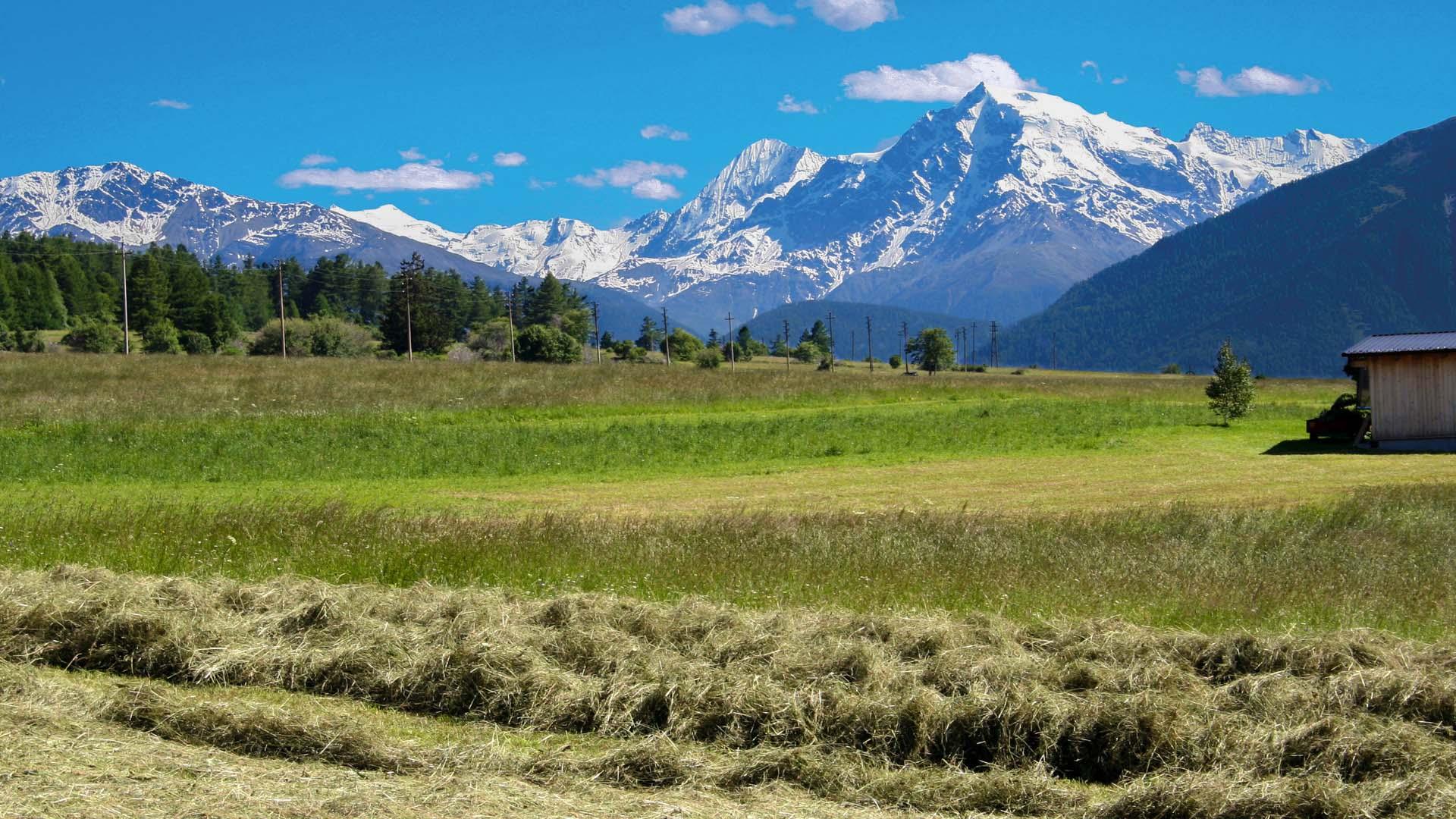 Blick vom Reschenpass zum Ortler (3.905 m)