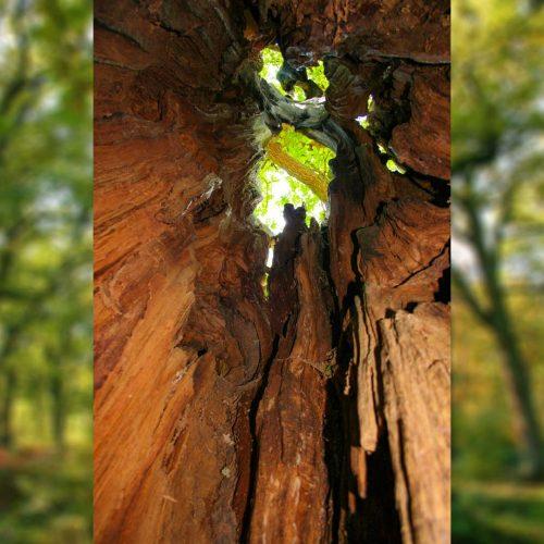 Urwaldpfad im Reinhardswald ©geokulturzeit