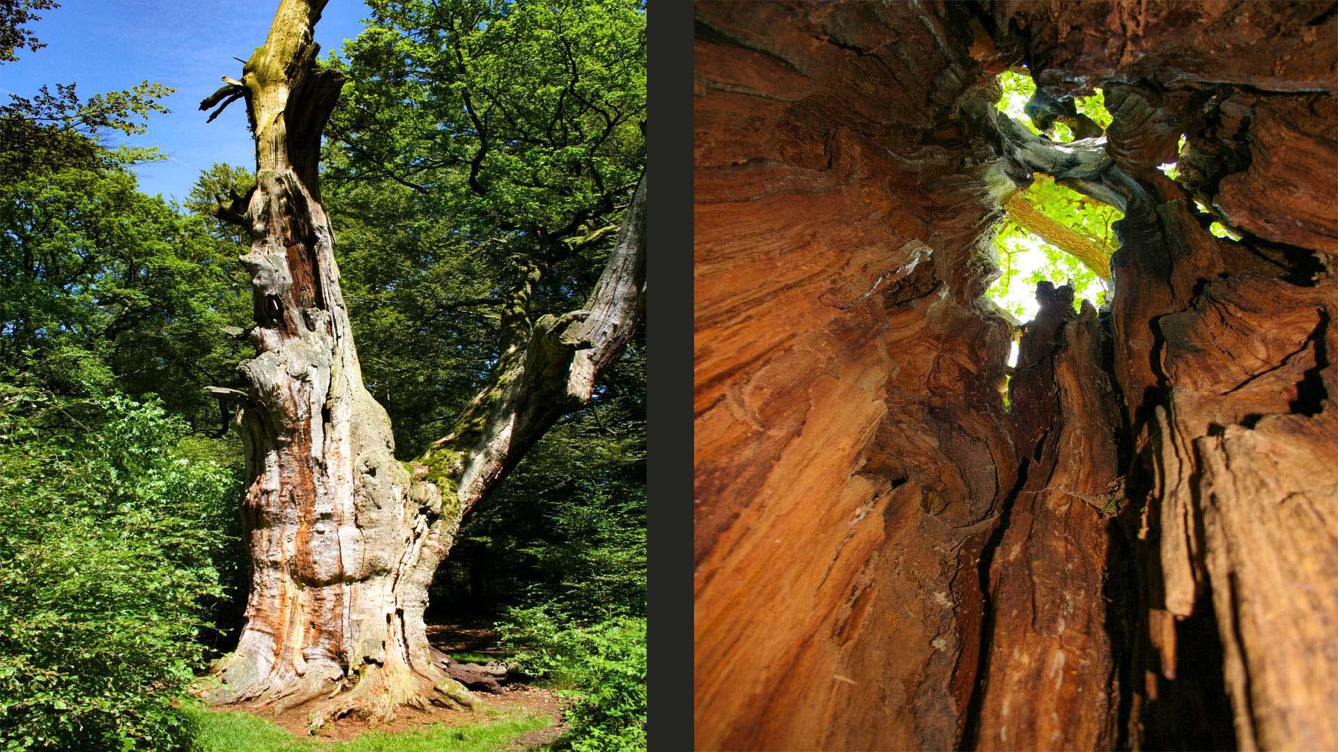 Urwaldpfad im Reinhardswald